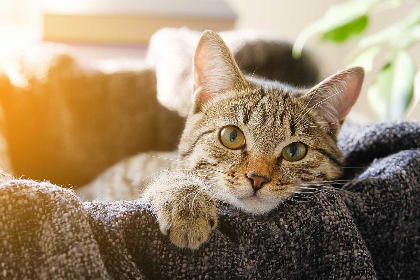 Formations en naturopathie pour les chats.