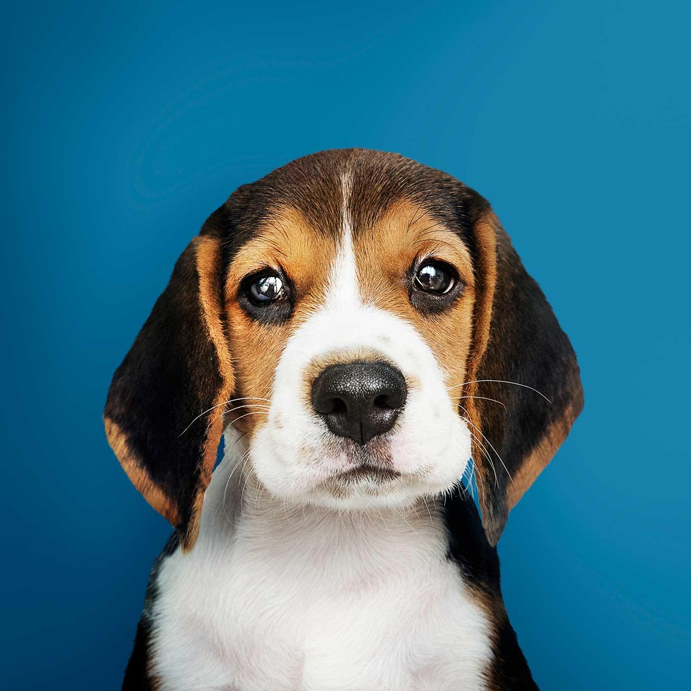 Un joli petit chien au regard triste.