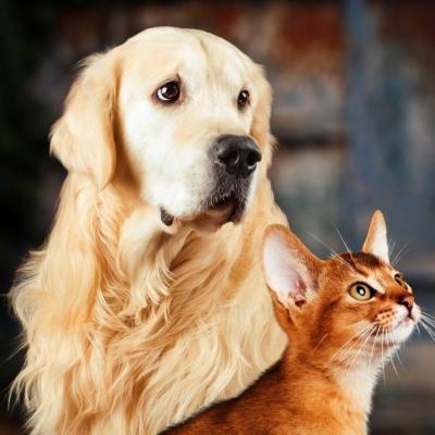 Comme chien et chat.