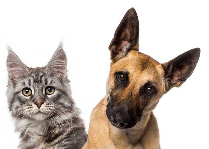 L'École Suisse de Naturopathie pour Animaux (ESNA) dispense une formation en naturopathie pour chiens et chats.