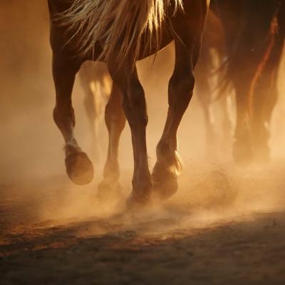 Sabots de cheval foulant un chemin poussiéreux.