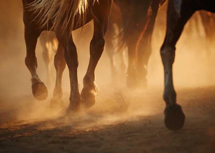 Sabots de chevaux dans la poussière.