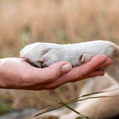 La patte d'un chien posée sur la main d'un homme.